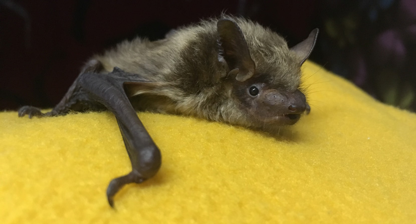 Cute bat on snuggly yellow blanket