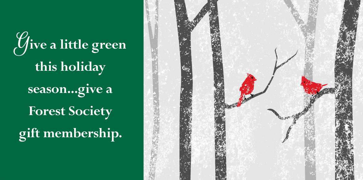 Gift a Forest Society gift membership this holiday season