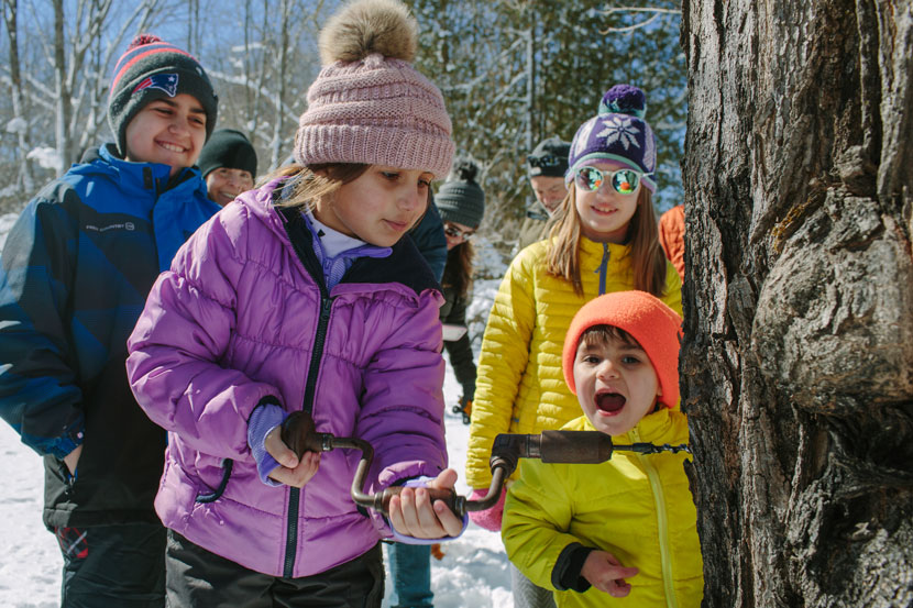 A young visitor gets a chance to try tapping a sugar maple tree that is many years her senior as part of the maple experience last weekend at the Rocks.