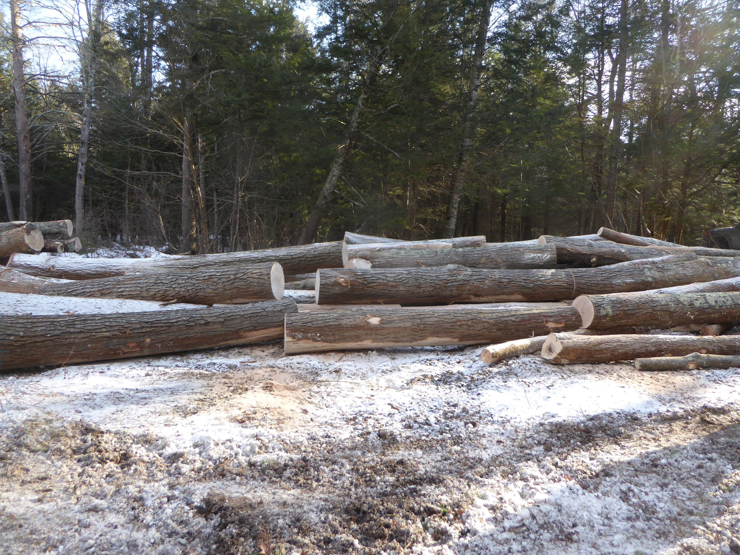 Hardwood logs on the landing are cut into sections to be trucked to Cersosimo Lumber's sawmill in Brattleboro, VT.