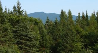 A mountain in the distance from a green spruce forest.