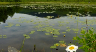 A pond with lily pads with Monadnock in the background.