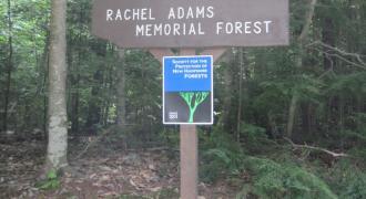 Rachel Adams Memorial Forest