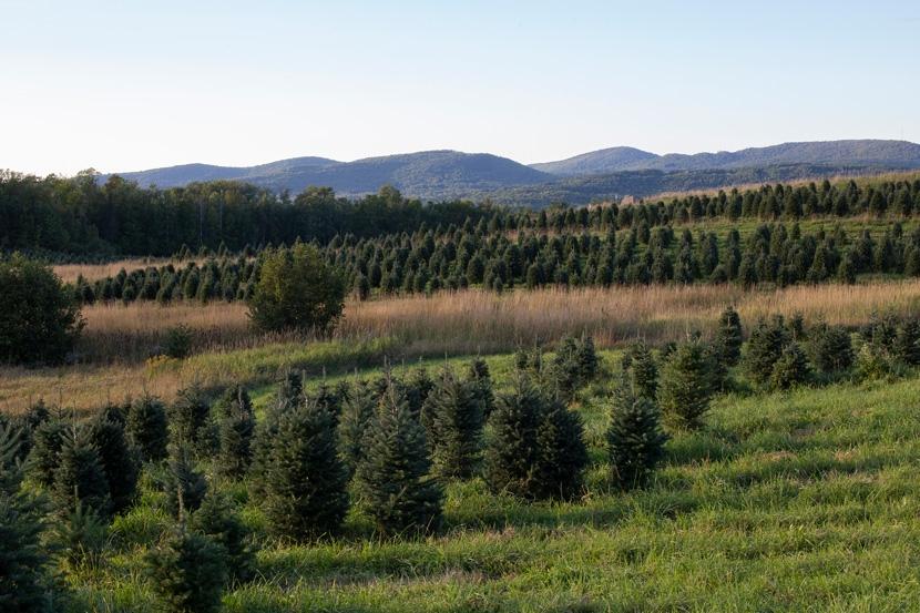New Hampshire Tree Farm Field Day at the Rocks in Bethlehem