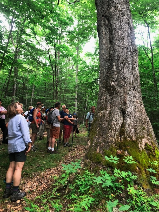 Hikers at a guided hike into the forests of New Hampshire