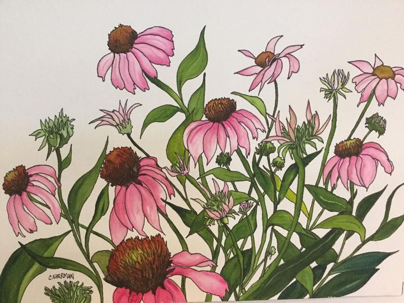 Carolyn Sherman painting flowers echinacea