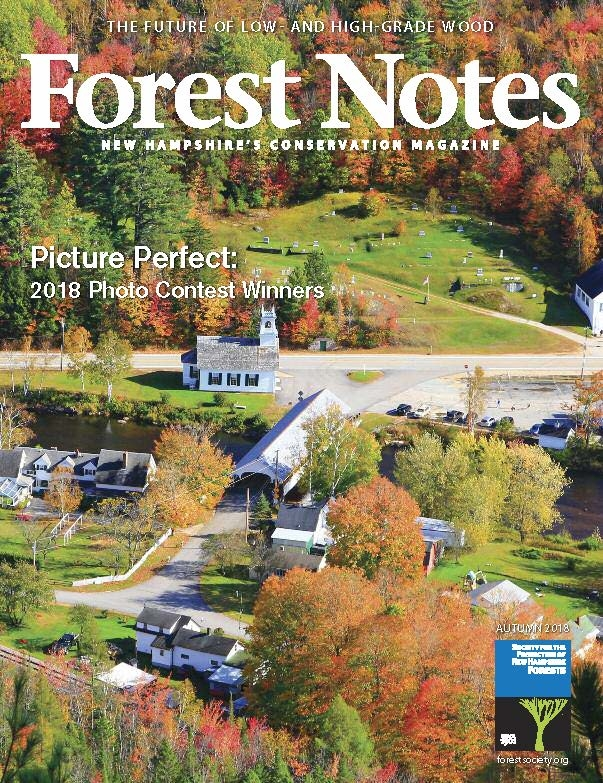 Forest Notes, Fall 18