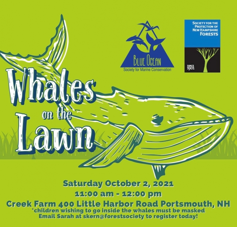 A graphic advertising Whales on the Lawn at Creek Farm with a drawing of a whale.