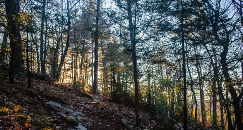 Late autumn sunlight on a hemlock-lined section of trail at Moose Mountains Reservation in Middleton and Brookfield, NH