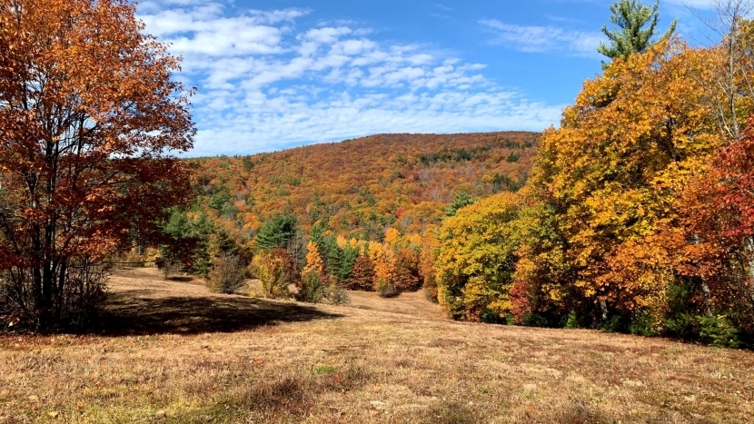Trees and field landscape with autumn leaves and colors.