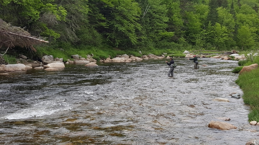 Fly fishing Ammonoosuc River Forest Project SPNHF