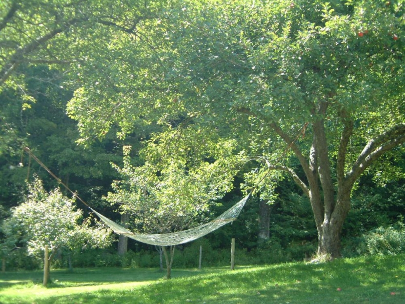 Hammock suspended between two apple trees in late summer sunlight