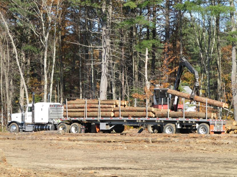 N.H. hemlock logs being loaded at Green Crow Corporation in Andover.
