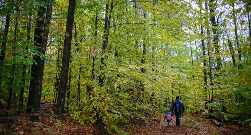 Family friendly hiking at Madame Sherri Forest in Chesterfield New Hampshire