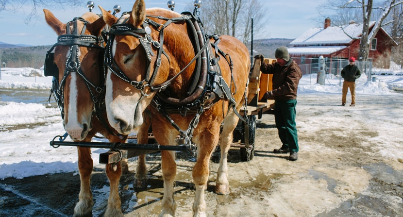 The complete maple experience at the Rocks includes a horse-drawn wagon ride to the sugar house. The fence in the background surrounds the foundation of the Tool Building that burned to the ground on Feb. 13, 2019.