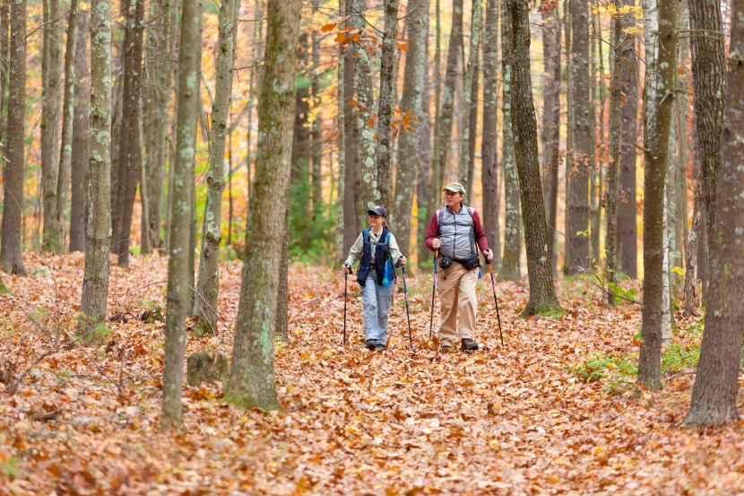 Two hikers walk through a sea of orange leaves in a forest.