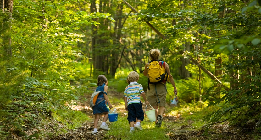 Family walks on a trail to go blueberry picking on a forest reservation