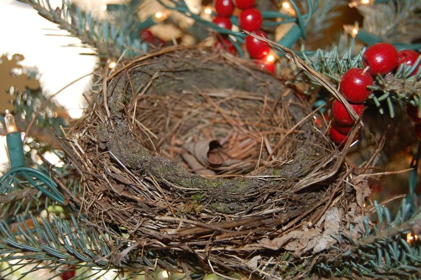 Nest In The Christmas Tree