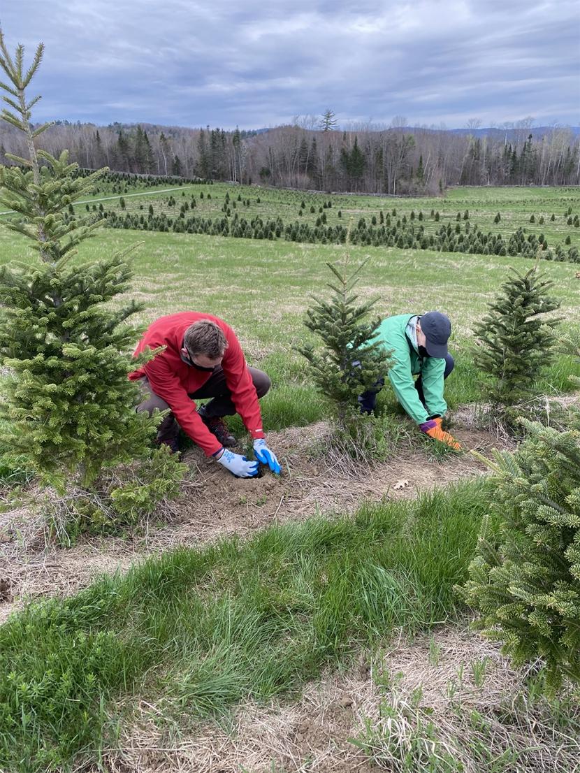 Volunteers plant trees at The Rocks.