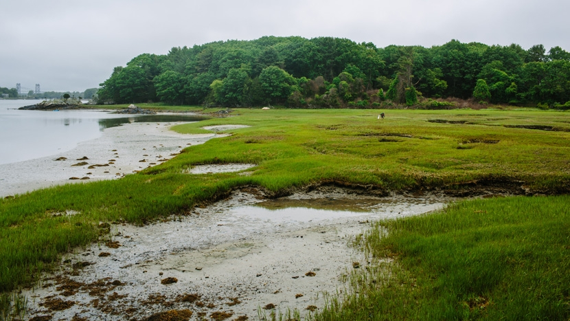 Marsh grasses at the mouth of Sagamore Creek