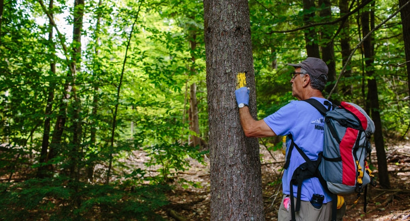 Land Steward painting a blaze on a tree along a forested trail