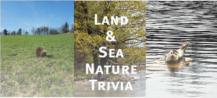 trivia - land & sea with images