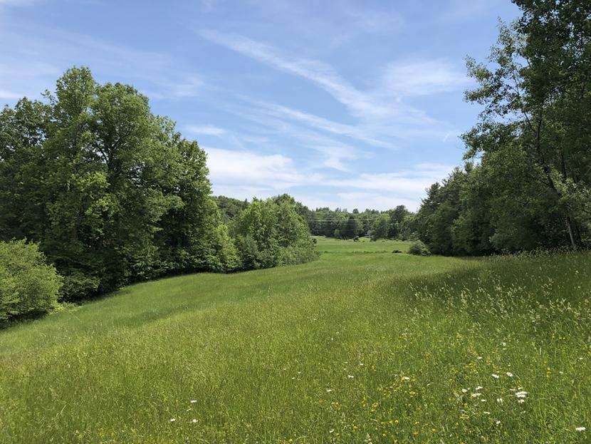 A green field on Tuckaway Farm.
