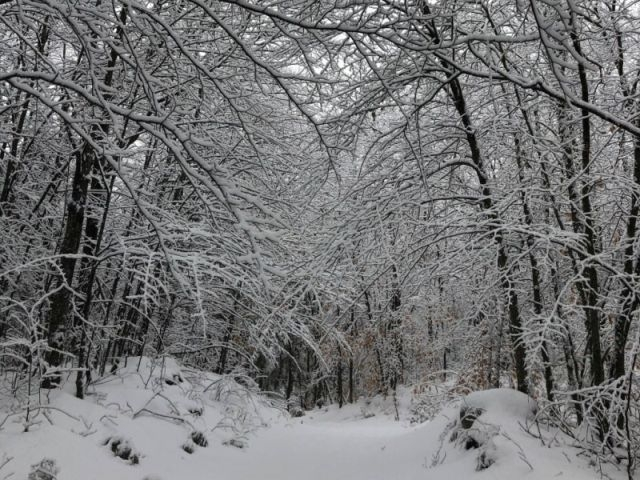 Winter Woods Road in Snow_ELord