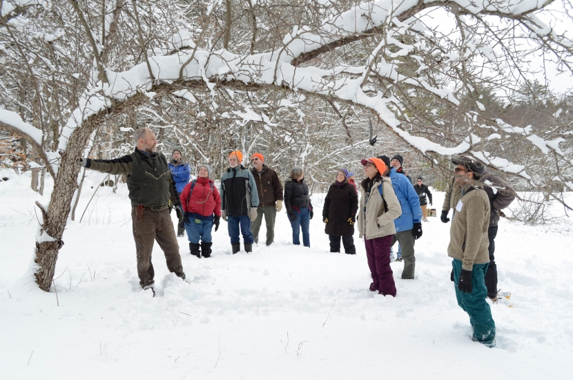 Wild apple tree pruning and release workshop during winter in New Hampshire