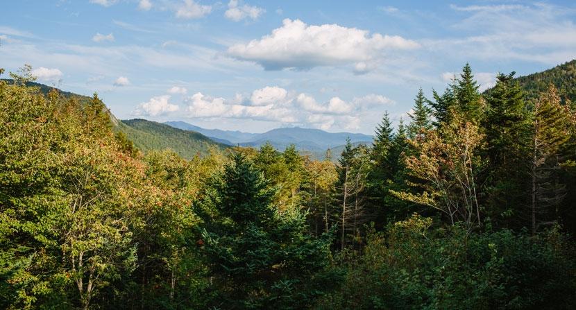View at tree level blue hazy sky