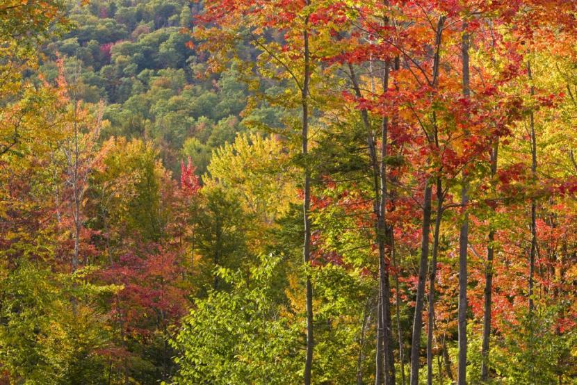 Fall foliage - hardwoods