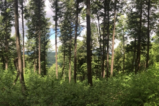 A thick forest.