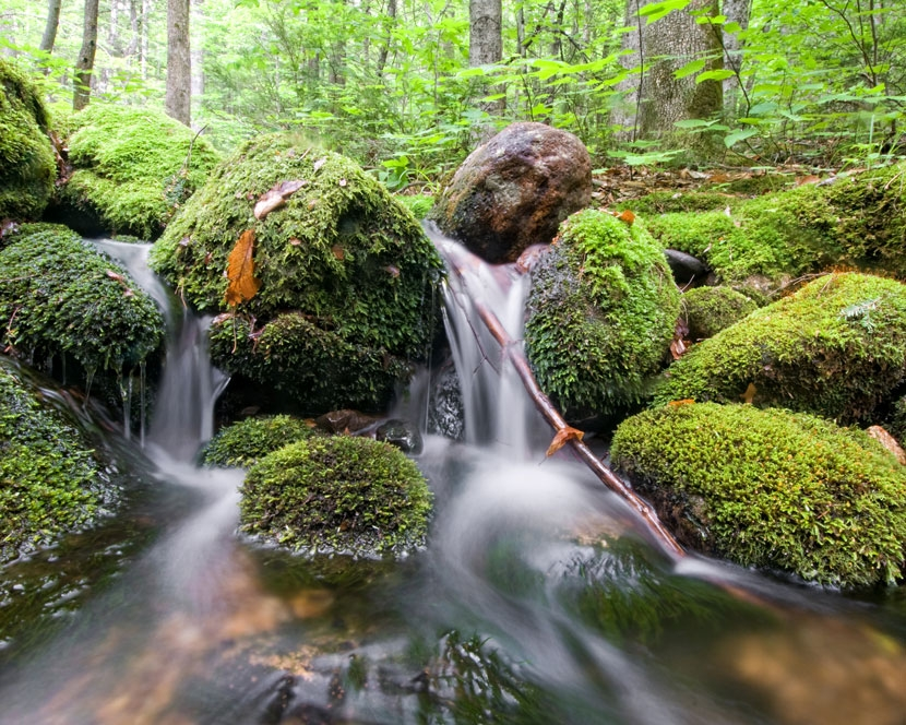 Slippery Brook Trail, Chatham, NH