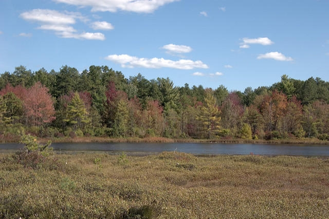 A view of Ponemah Bog in Amherst, NH