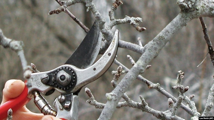 apple pruning winter fun outside outdoors forests workshop education Rocks