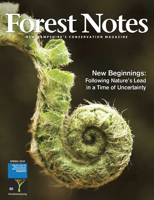 Forest Notes, Spring 2020