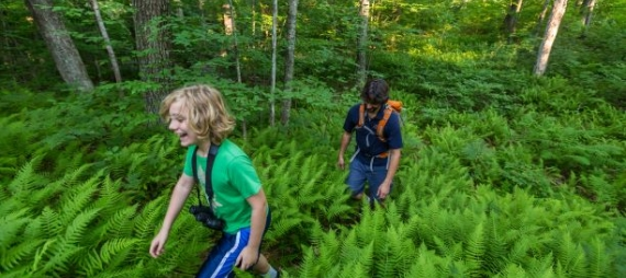 A young boy hikes through a field of ferns with his father behind him.