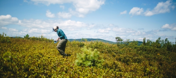 A woman walks across a field carrying a container to pick blueberries.