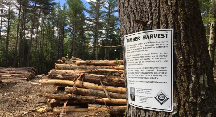Timber harvest notice on Forest Society lands