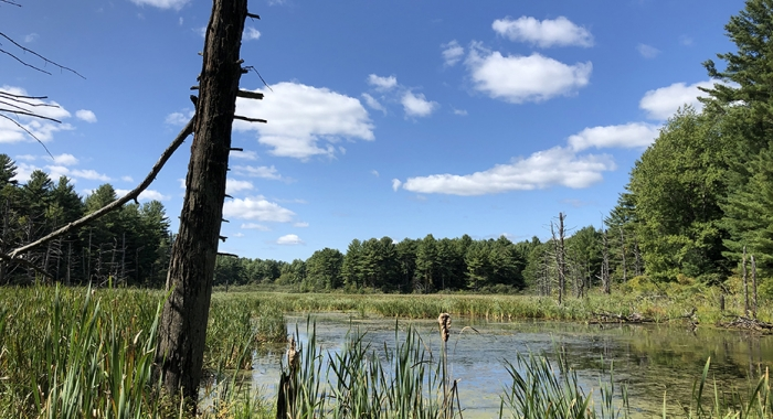 A view of a beaver meadow at Clay Brook Farm. (Photo: Brian Hotz)