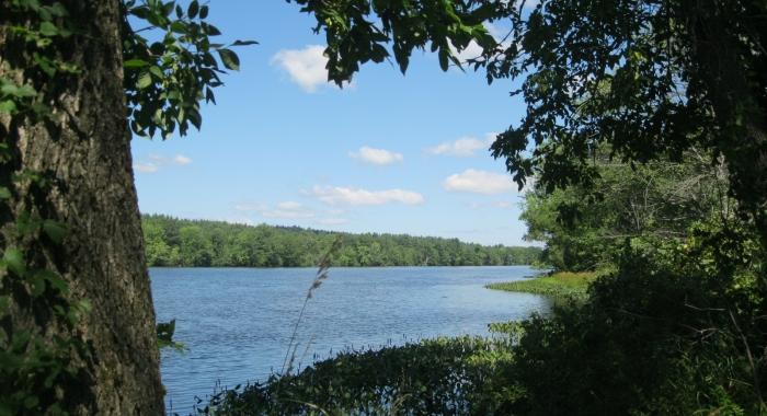 Edge of deep blue water body with deep green foliage along edge.
