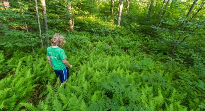 a young hiker walks through ferns at Powder Major's Forest in Durham and Madbury, NH