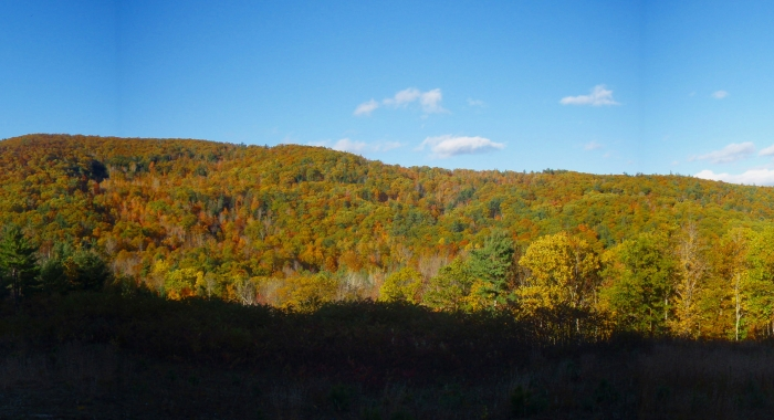 Fall Foliage at Moose Mountains
