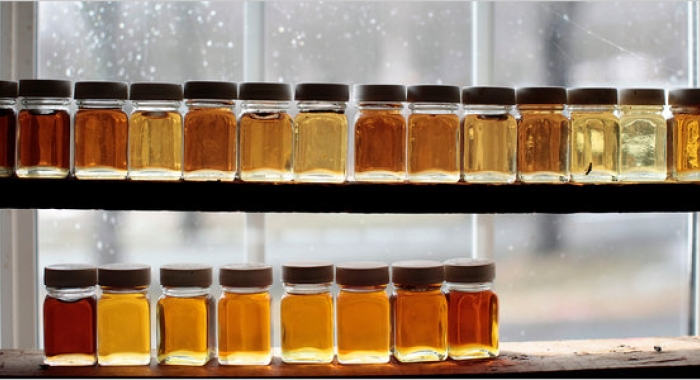 Jars of maple syrup in a diversity of color sit on a shelf to be used for grading.