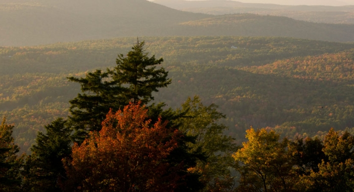 Trees and expansive forest in background at the Ashuelot River Headwaters Forest in Lempster