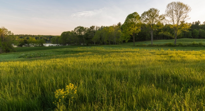 Farm field and forest under conservation in New Hampshire