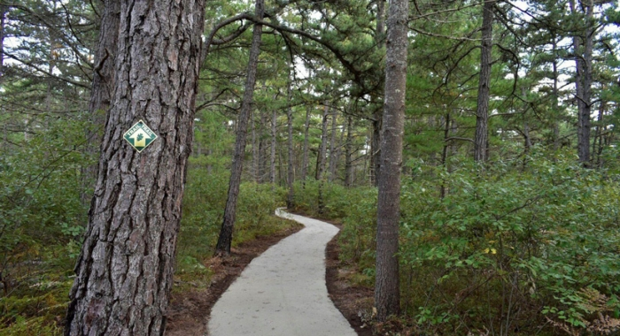 Accessible trail through pine barren habitat in Ossipee New Hampshire