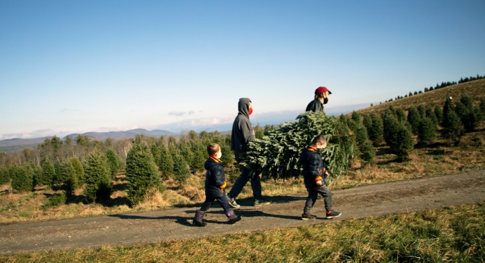 A family carries a freshly cut Christmas tree in from the fields at The Rocks.