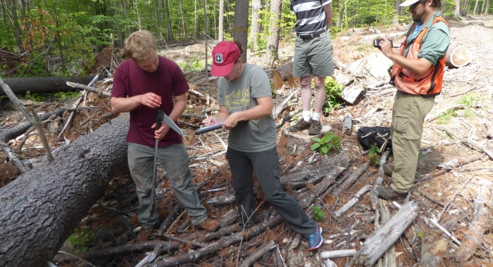 Studying blown down white pine trees at Whittemore Reservation.  Forest Society Staff photo.