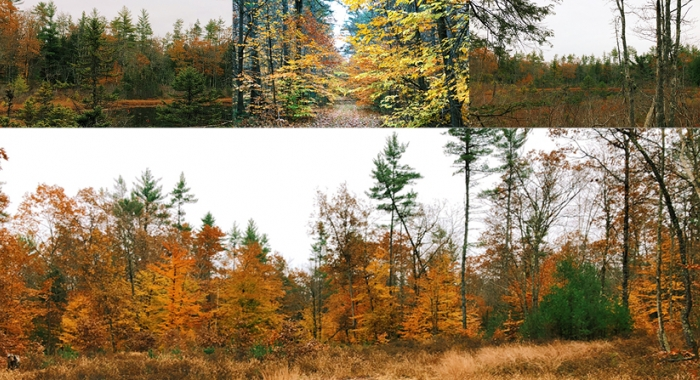 Conserved land in Hopkinton New Hampshire features forests, fields, and wetlands